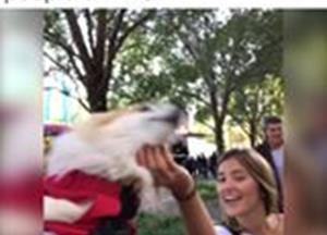 Corgi in a backpack meets the people of NYC