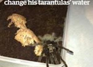 Changing tarantulas